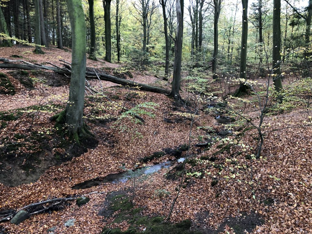 Diary, 22/11/18 – Fall will tear us apart