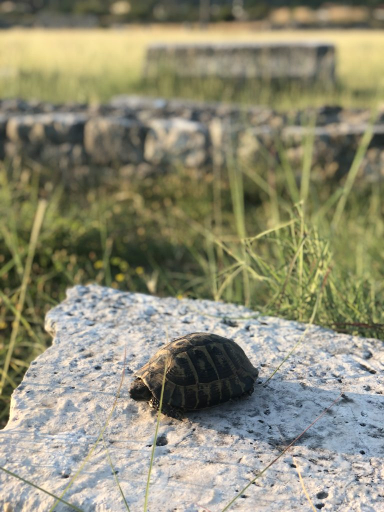 Diary, 02/09/19 – Nature and responsibility